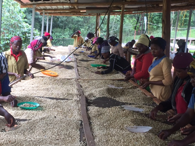 Coffee origin trip to Rwanda